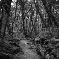 New Zealand: Along the Kepler Track